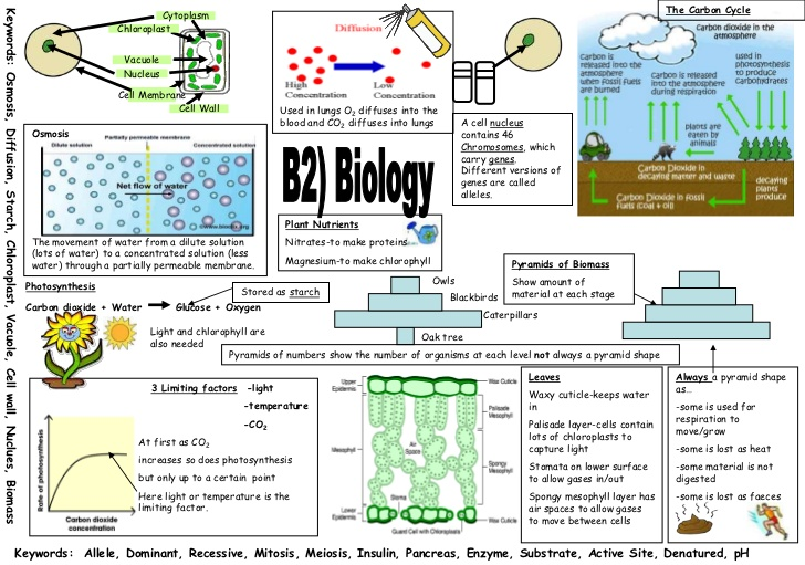 Example revision poster